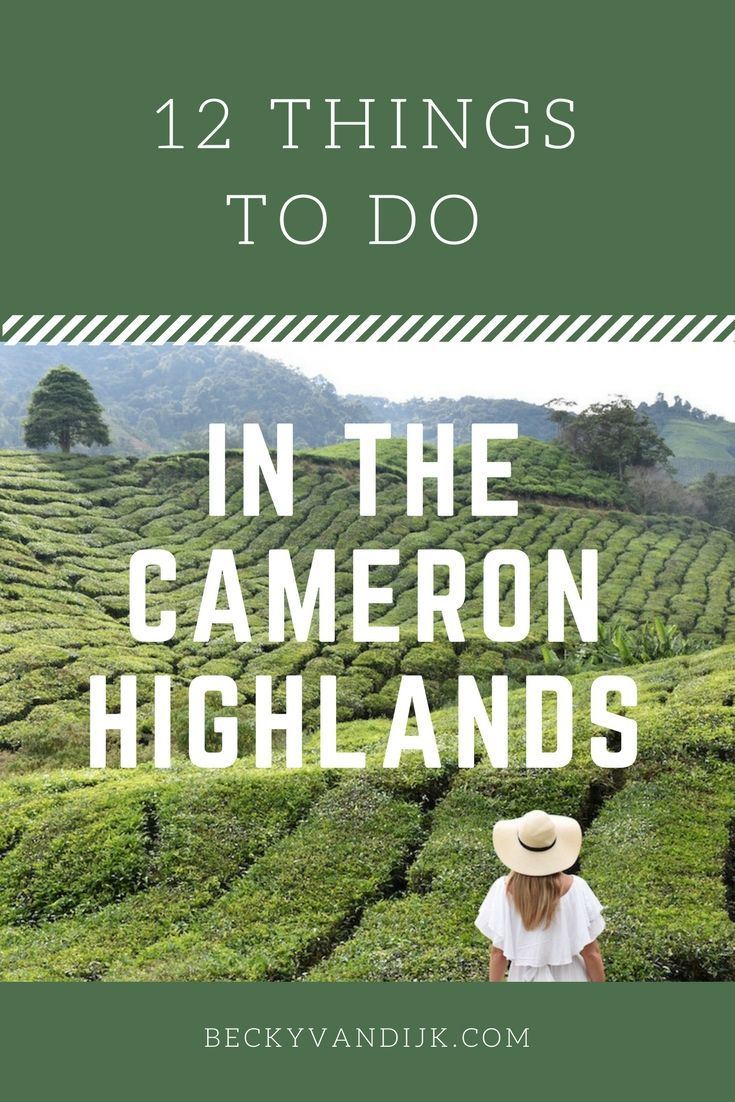 12 THINGS TO DO IN THE CAMERON HIGHLANDS: The Cameron Highlands in Malaysia are often overlooked in favour of the beach resorts on the coasts. But missing this area would be a mistake. Reminiscent of the English countryside, with mock tudor houses, afternoon teas, and lush green rolling hills the Cameron Highlands offer its visitors a variety of things to do and here are my top 12! Read it on http://BeckyvanDijk.com