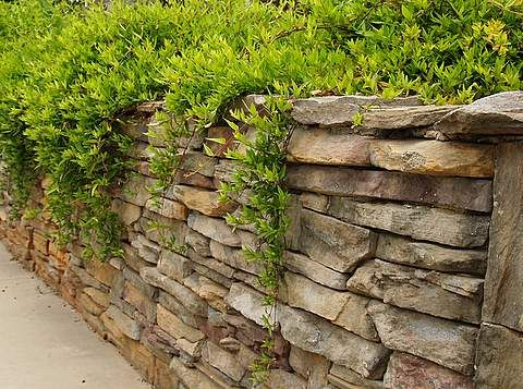 Rock Wall With Cascading Plants