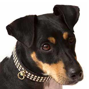 Collar con 3 filas de cristales Swarovski para perro color negro.¡Combínalo con la correa!