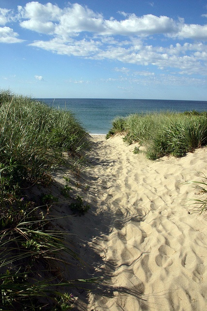 Ladies Beach Nantucket Island Massachusetts