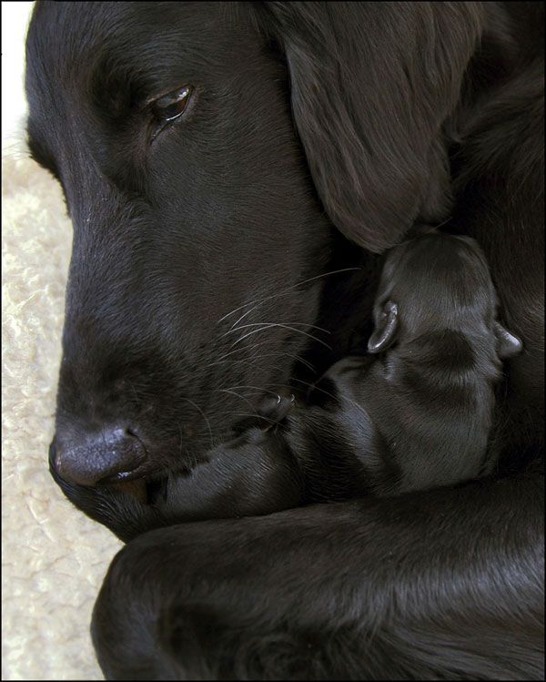 A mothers love...