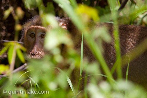 Photographs of Danum Valley Conservation Area, Sabah, Borneo © Quintin Lake