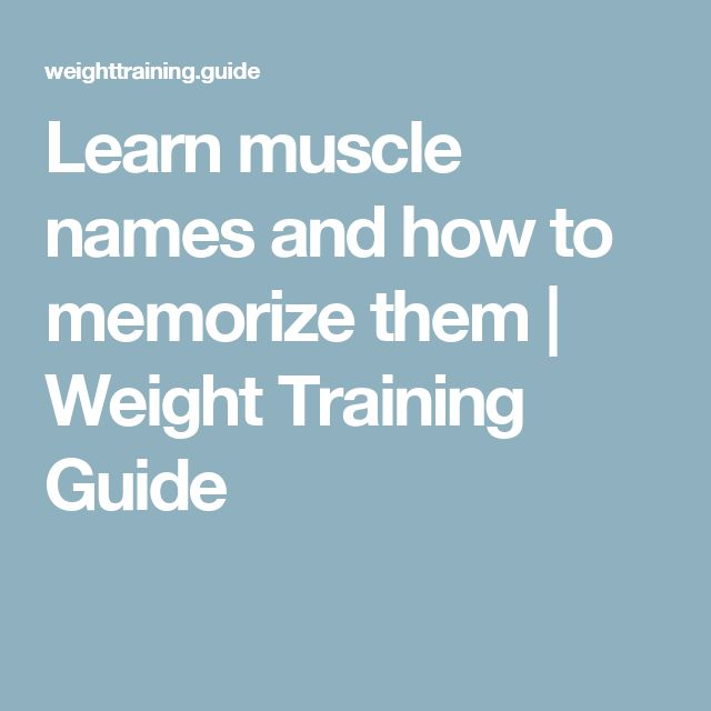 Learn muscle names and how to memorize them | Weight Training Guide