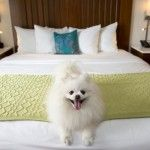 Puppy love Valentine's Package at The Alfond Inn
