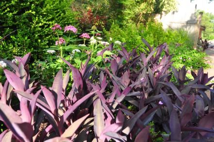 Want perennials that like sun bathing? Grow these high-powered beauties for fun in the sun. From the experts at HGTV.com.