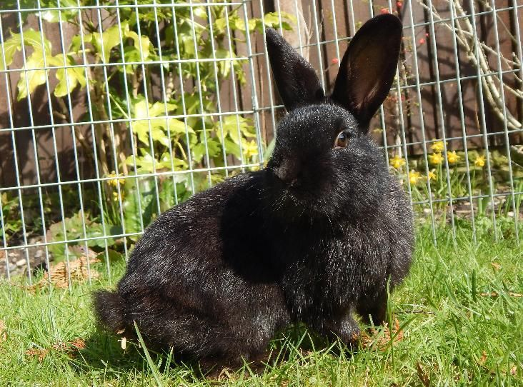 CRACKER Find a pet Pets, Animals, Rabbit