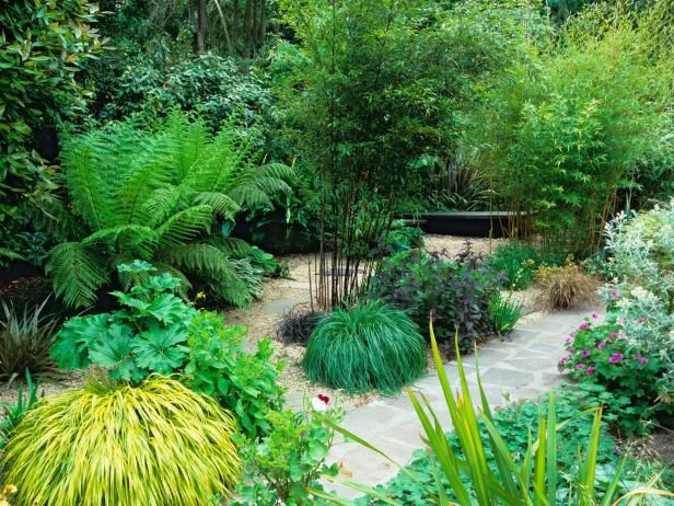 Best 25 bamboo grass ideas on pinterest small balcony for Ornamental grass garden designs