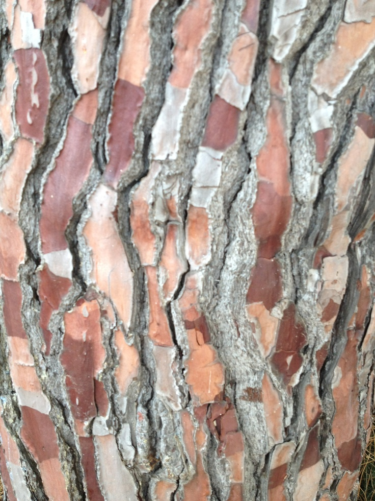 Stunning tree bark in my local area.
