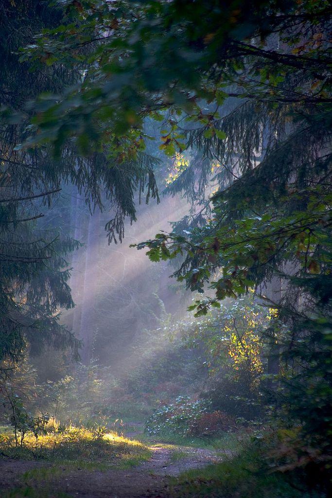 Białowieski Park Narodowy / Bialowieza National Park