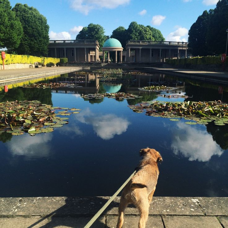 Explore the fantastic parks! Eaton Park in Norwich is a beautiful dog friendly green space.