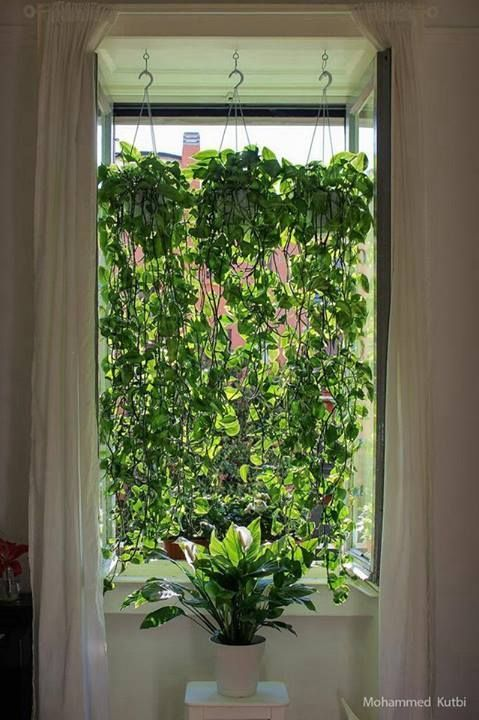 pothos curtain - Bing Images