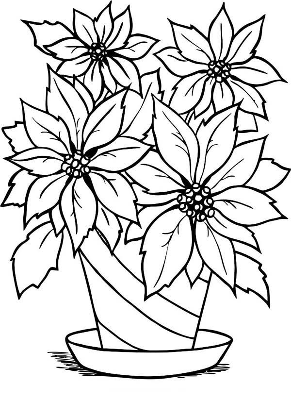 Charming Poinsettia Flower In Flowerpot Coloring Page Flower