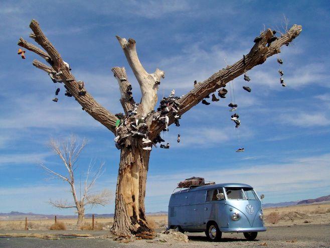 Nevada Shoe Tree.