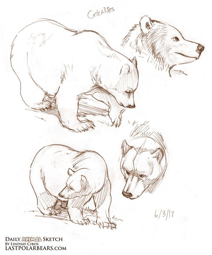 25+ best Animal sketches ideas on Pinterest | Lion illustration ...