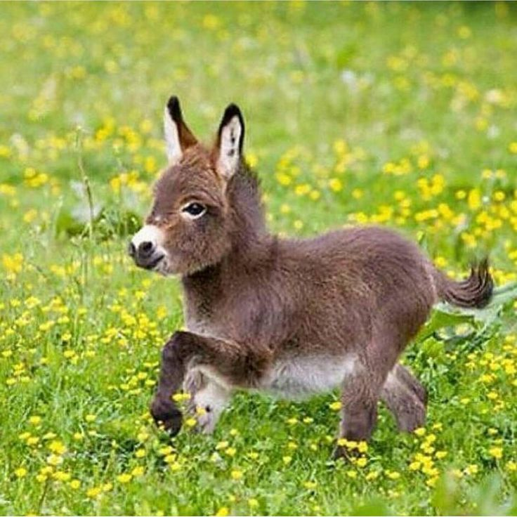 Romping baby donkey - It's not so serious to be a little donkey sometimes. We all are.