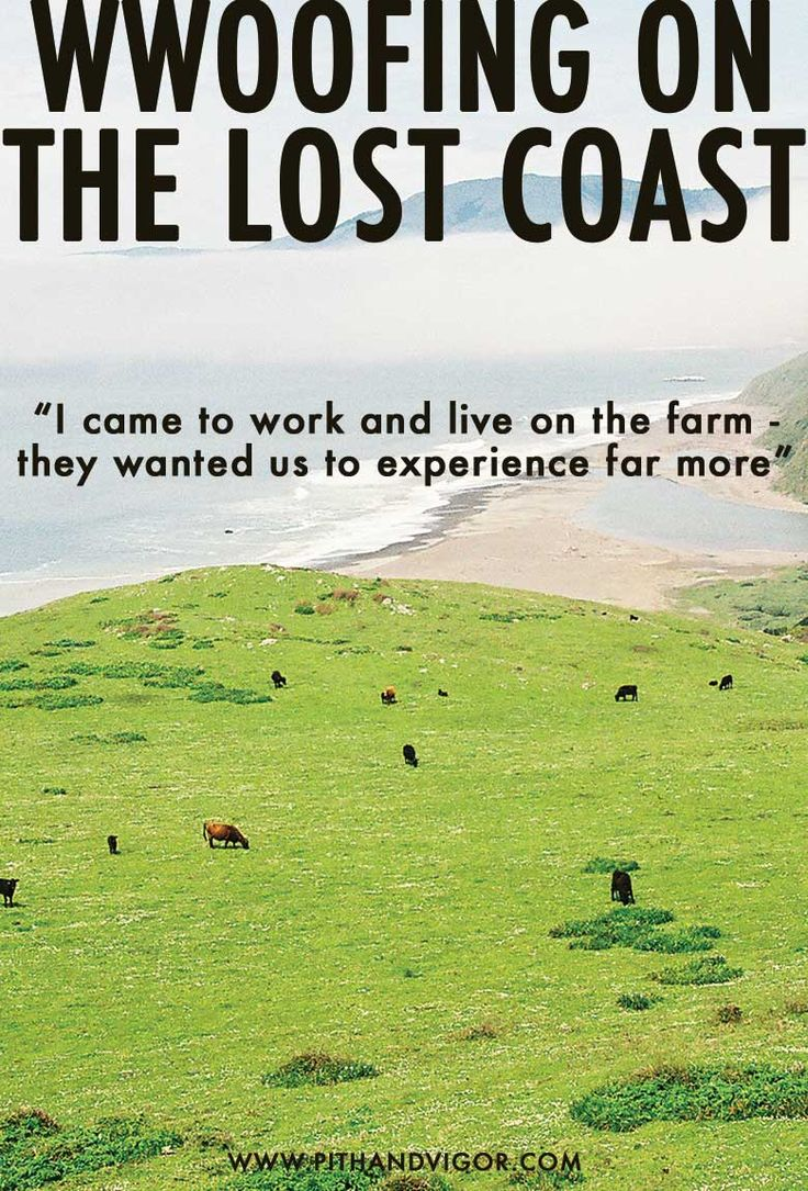 WWOOFing on the lost coast of California - A Travel Essay