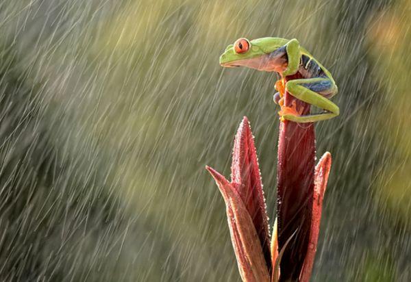 Brilliant Nature Photography Ideas - AntsMagazine.Com