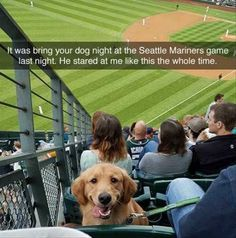 Golden Retrievers love hot dogs...especially the one your eating!