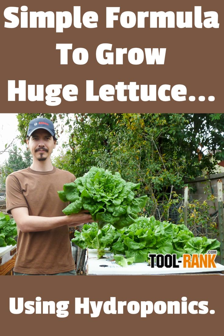 "Simple hydroponic nutrient solution calculator lets you grow huge lettuce in almost any container using the ""set and forget"" Kratky Method."