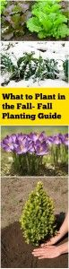What to Plant in the Fall- Fall Planting Guide
