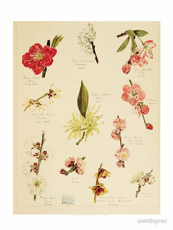 The garden of Japan A year's diary of its flowers Alfred East and Francis Taylor Piggott 1896 0016 Flower Assortment