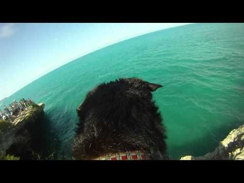Watch this Dog Dive of a Cliff with GoPro Camera Strapped on his Back!  This makes me want to strap a GoPro on my dog for a whole day. How awesome to see life from his point of view for a day!