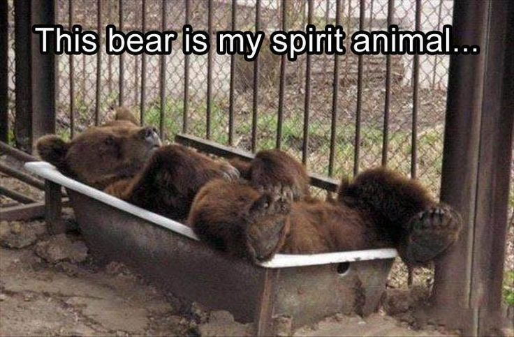 20 Funny Animal Pictures for Your Friday