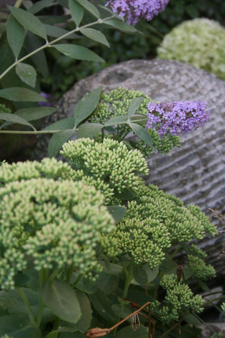 Combinatie vaste planten en waterornament