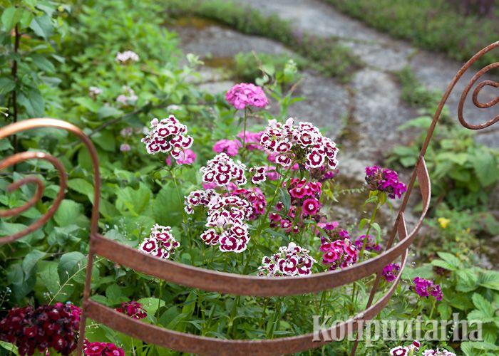 Kasvituki on parhaimmillaan koriste itsessään. www.kotipuutarha.fi