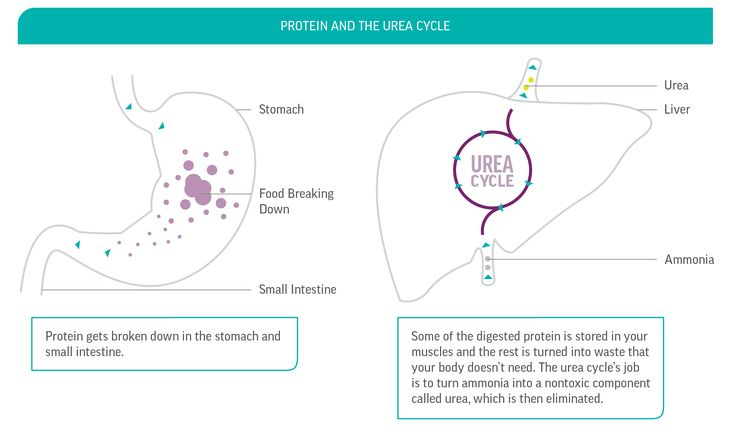 ammonia in human body | How the Urea Cycle Works: Breaking Down Food in the Body