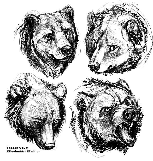 Les 50 meilleures images du tableau bear sketches sur - Dessin de grizzly ...
