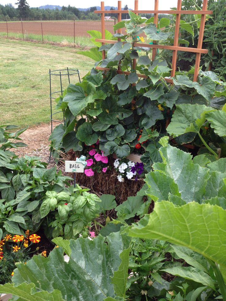 33 besten Straw Bale Gardening Bilder auf Pinterest | Gemüsegarten ...
