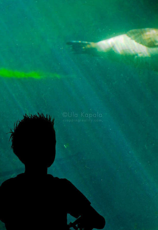 Under water | Cropping Reality by Ula Kapala
