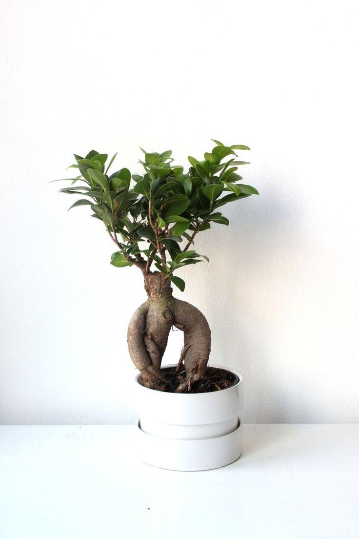 1000 images about plants on pinterest. Black Bedroom Furniture Sets. Home Design Ideas