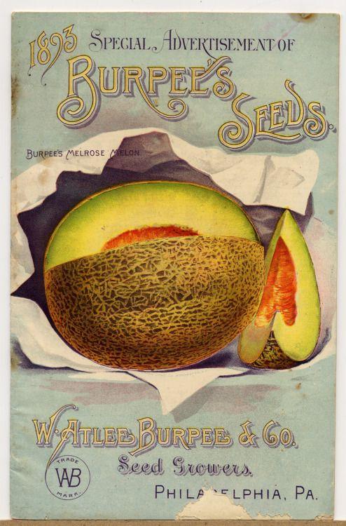 Vintage Burpee's Seed Catalog cantaloupe fruit artwork