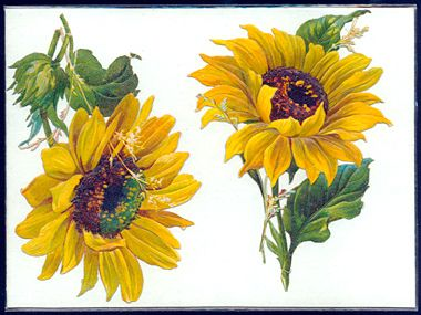 Thanks to Oscar Wilde and the Aesthetic Movement, the sunflower became an emblem of good taste in the 1880s. Enjoy this collection of sunflower images from the 1880s.