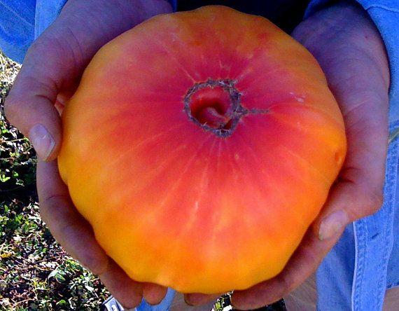 PINEAPPLE BEEFSTEAK Organic Heirloom Tomato Seeds on Etsy, $2.75