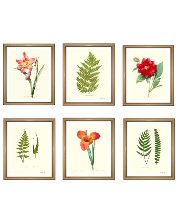 Hey, I found this really awesome Etsy listing at https://www.etsy.com/listing/202894136/botanical-prints-set-any-6-botanical