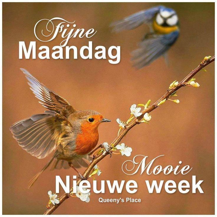 maandag | Fijne MaandagMooie nieuwe week Plaatjes