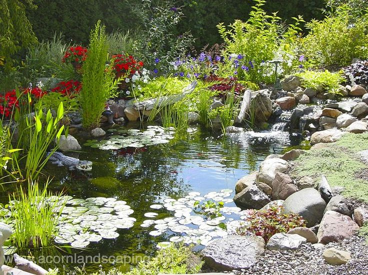 102 best Ponds Water Gardens images on Pinterest Garden ideas