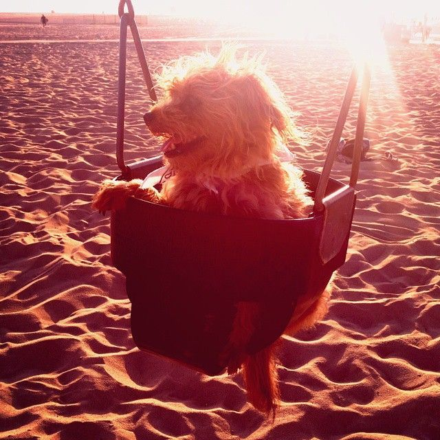 purses Want Sands Travel  World Just To black These  TravelDogs The   Instagram and See Summer