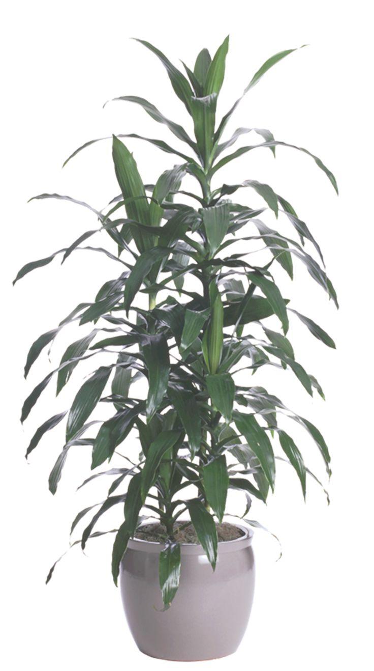 25 best ideas about low light plants on pinterest low for Plants low light indoor