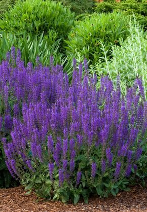 Round Up: 24 of the Best Low Maintenance Plants for Your Garden – Heather Paeplow