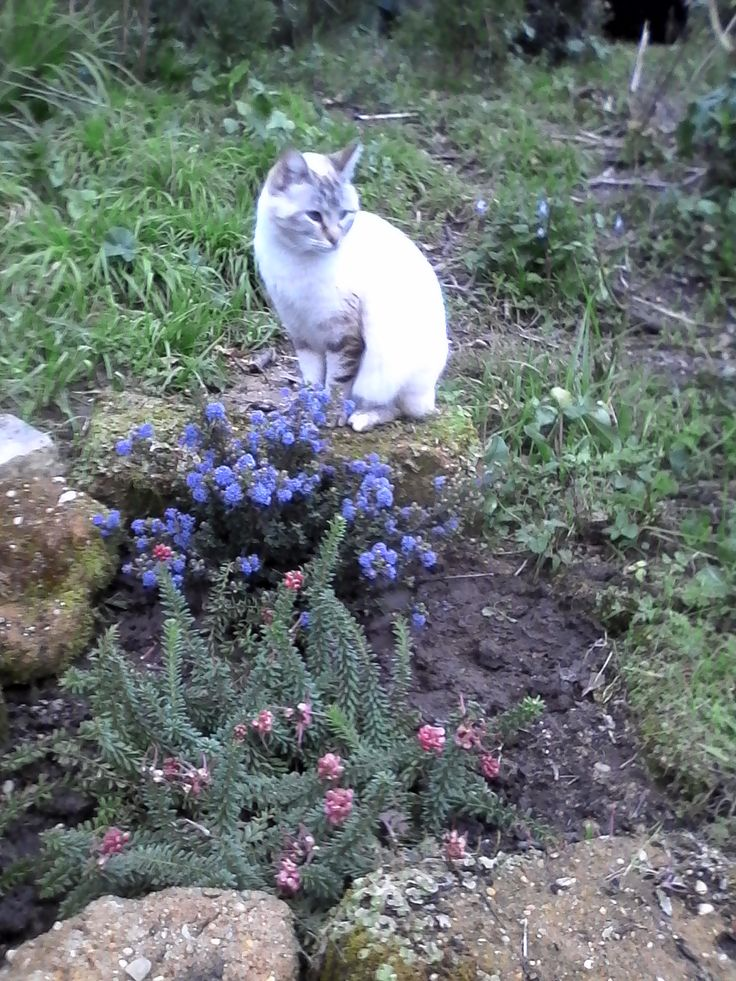 Kitty enjoying the garden