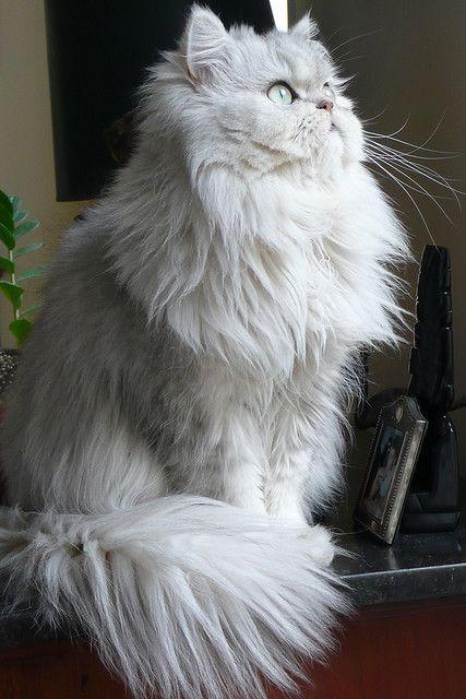 """Cats are always elegant."" --John Weitz"
