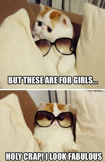 I look fabulous cat | Holy crap! I look fabulous! - Funny cat wearing fashion sunglasses.