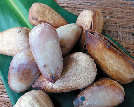 """Australian native superfoods: bunya nuts Bunya nuts are a rich source of protein. They """"can be used as a substitute for flour, great for peo..."""