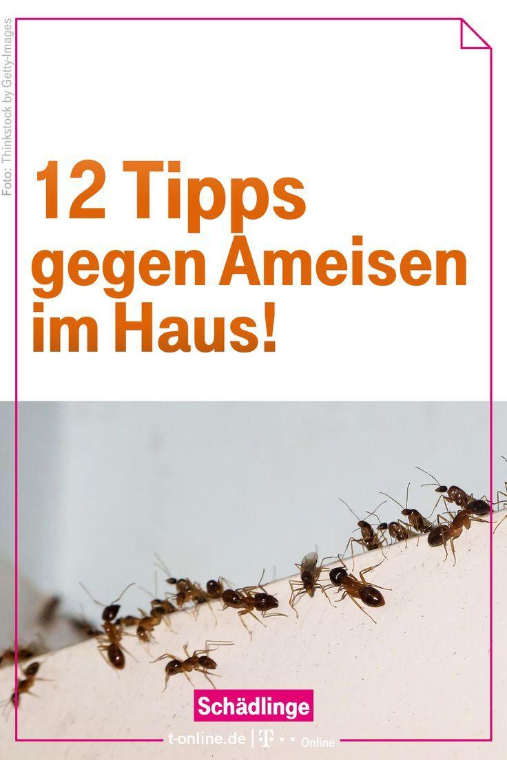 Zwolf Einfache Tipps Gegen Ameisen Im Haus Ameisen Im Haus Ameisen Ameisen Im Haus Bekampfen