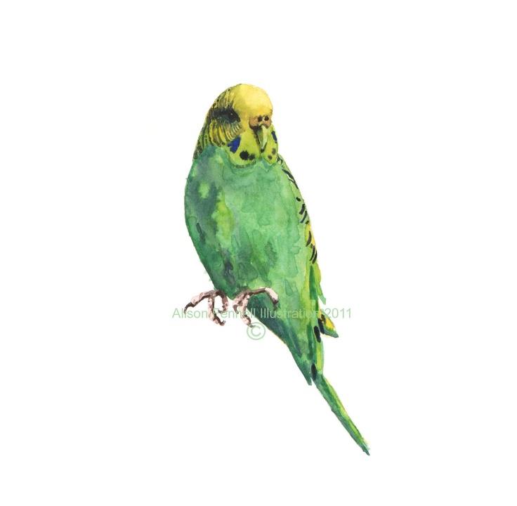 Green parakeet print green budgie budgerigar art birdie