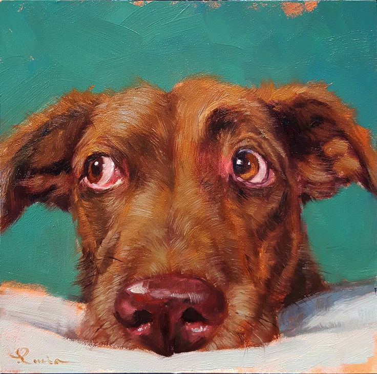 Dog art. love the eyes.  Order an oil painting of your pet now at www.petsinportrait.com